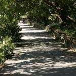 the route to the tea garden