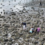 Qingdao : searching for shellfish at low tide