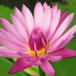 Beppu flora