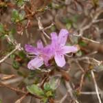 Flore of Eboshidake