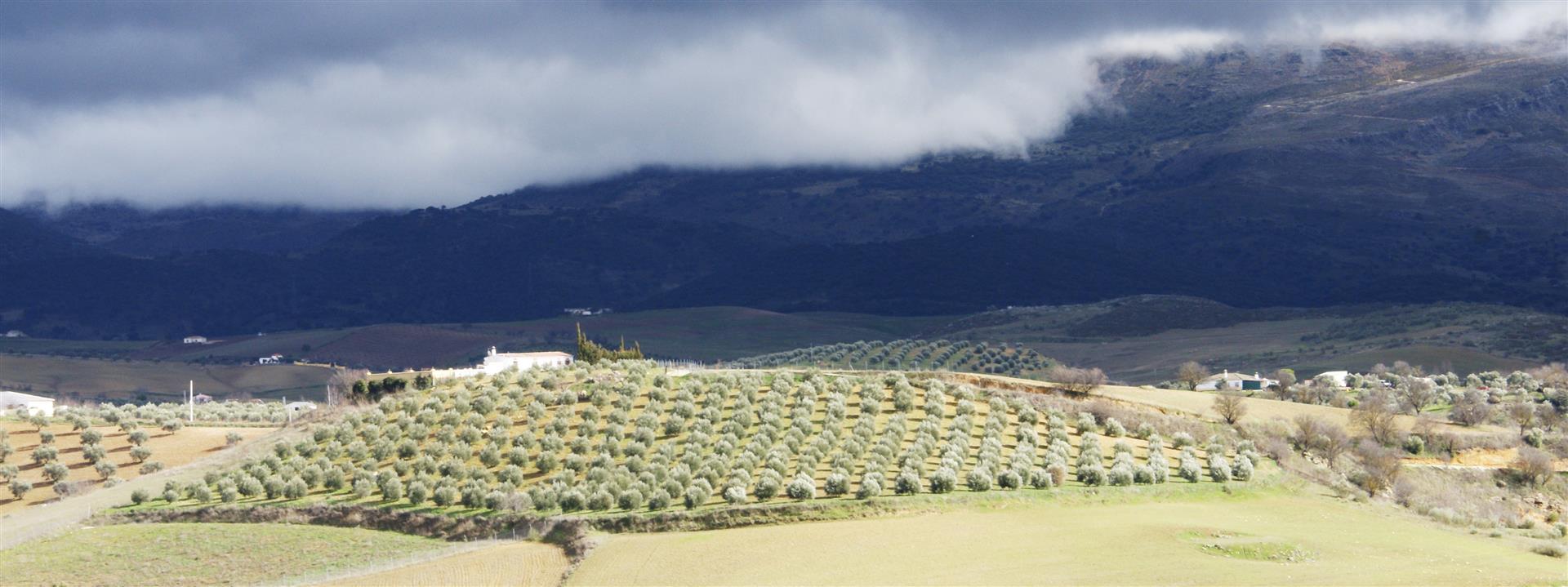 Ronda landscapes
