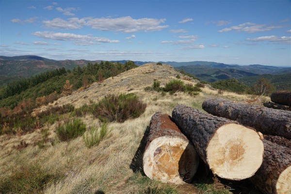 logs on the ridgeway