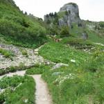 wandering through the alpine garden
