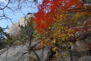 trees anchored in granite