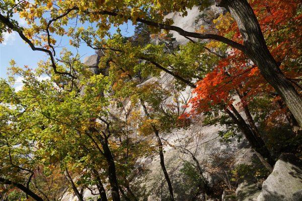 trees at any angle
